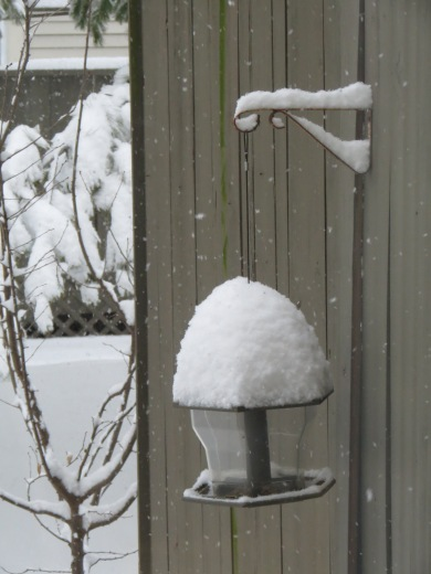 Poor Bird Feeder