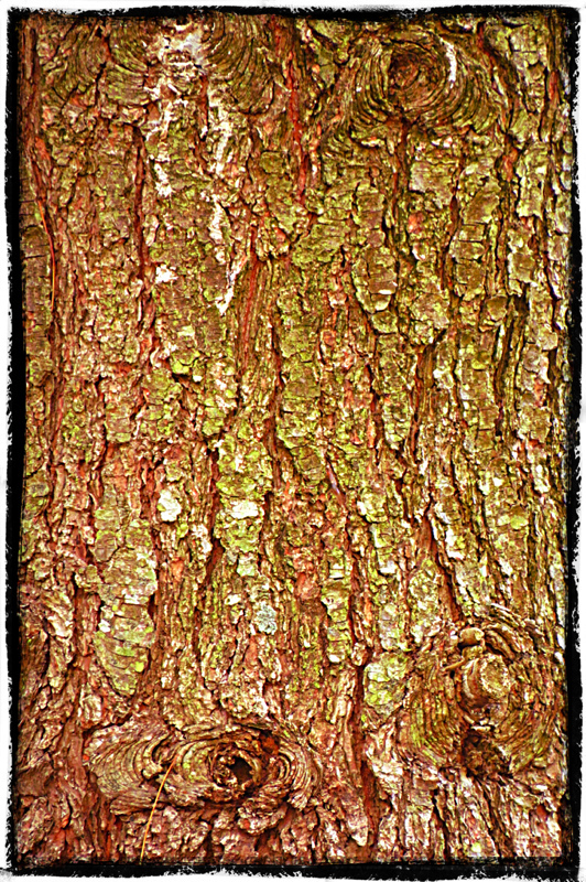 Tree Bark Up Close and Personal