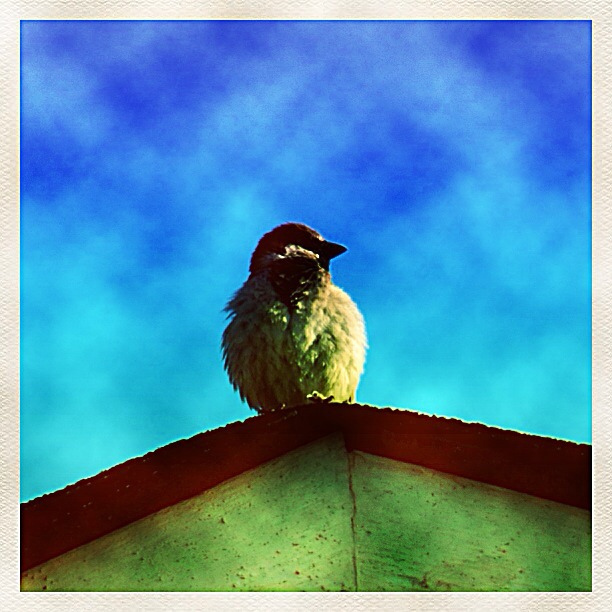 Bird on Rooftop