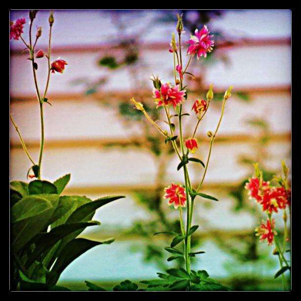 Flowers in Focus