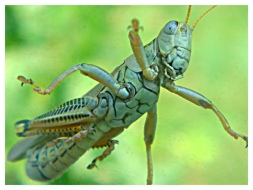 I Love My Camera, Look at this Bug!