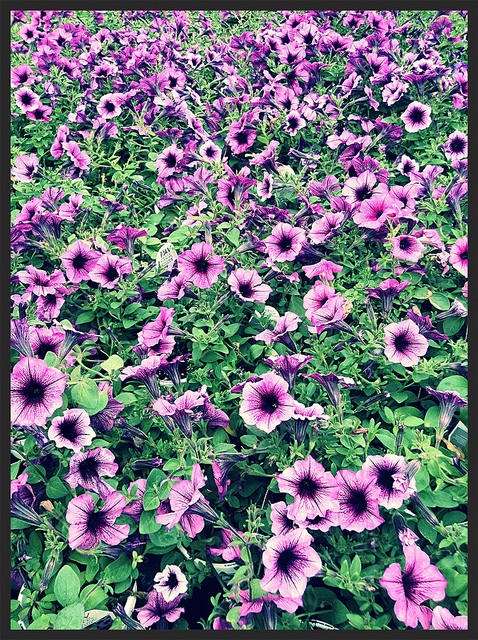 More Purple Flowers