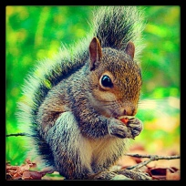 Hello Squirrel!