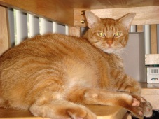 Very Fat Cat Under the Table.