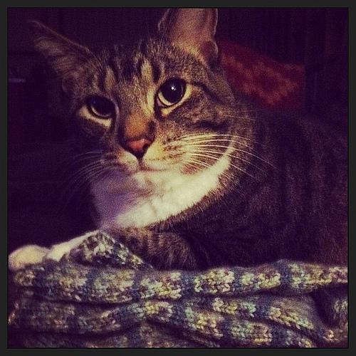 Max loves knitted socks.